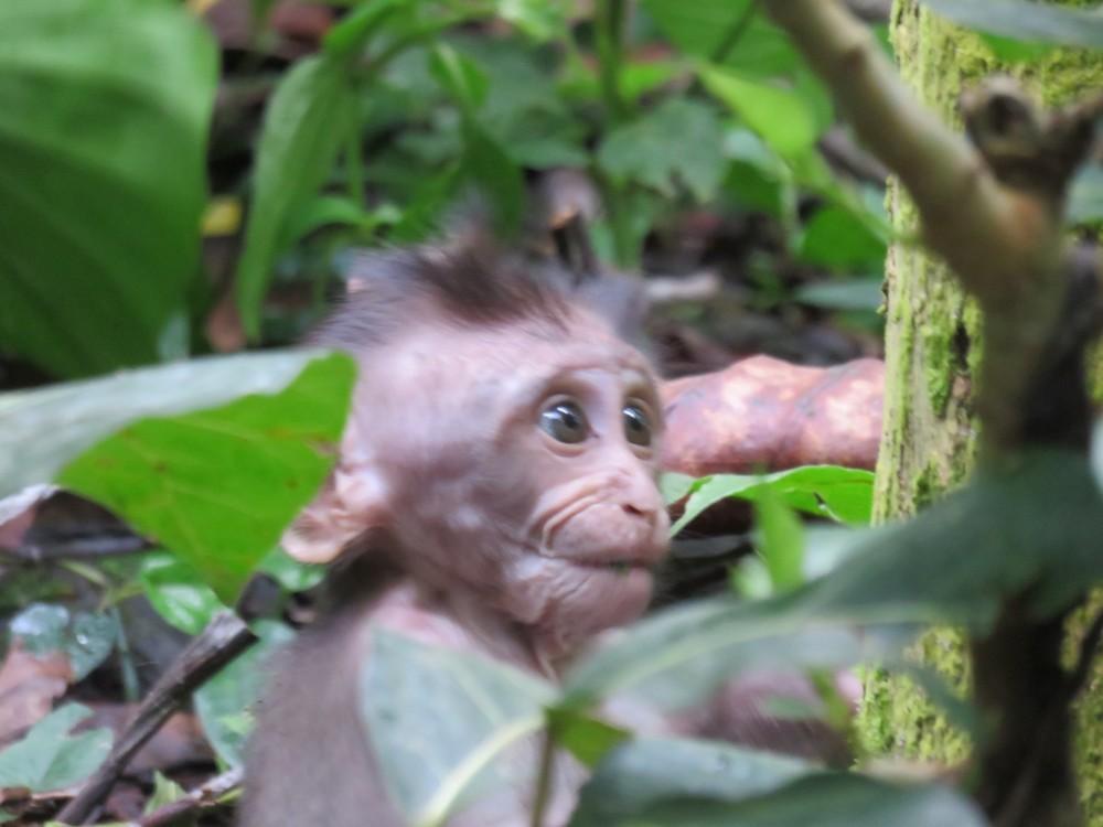 Newborn monkey looking around his new world