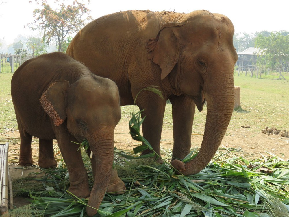 """Happy, normal family!Babytried to hog allleaves, and mom gave her a little trunk slap to say """"No!"""""""