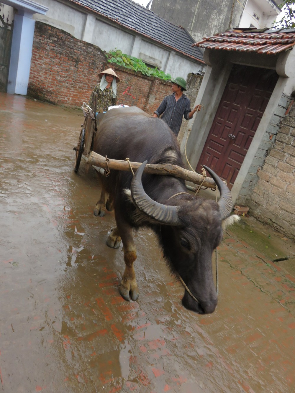 Sometimes you see motorbikes, other times you see water buffalo...