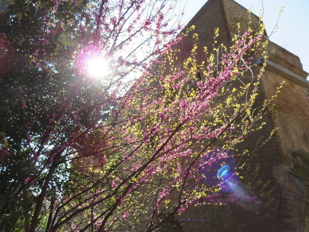 Early morning spring sunshine