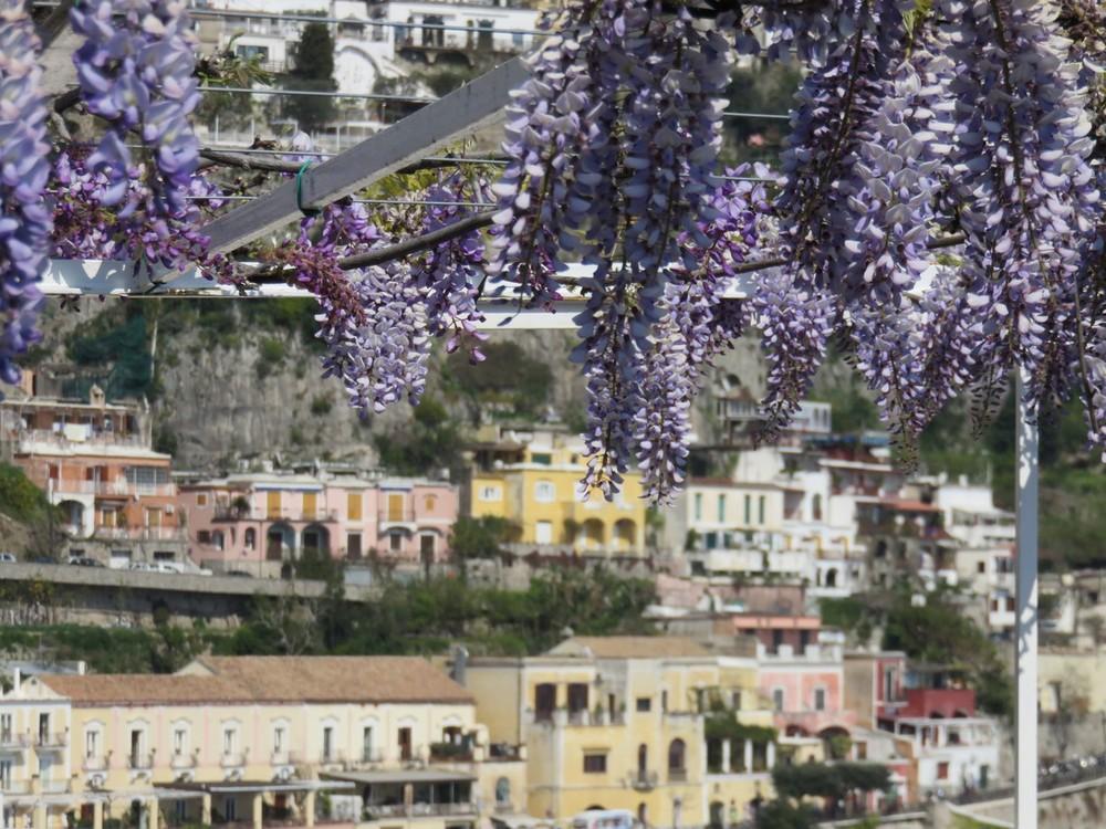 Wisteria everywhere in the Amalfi coast!