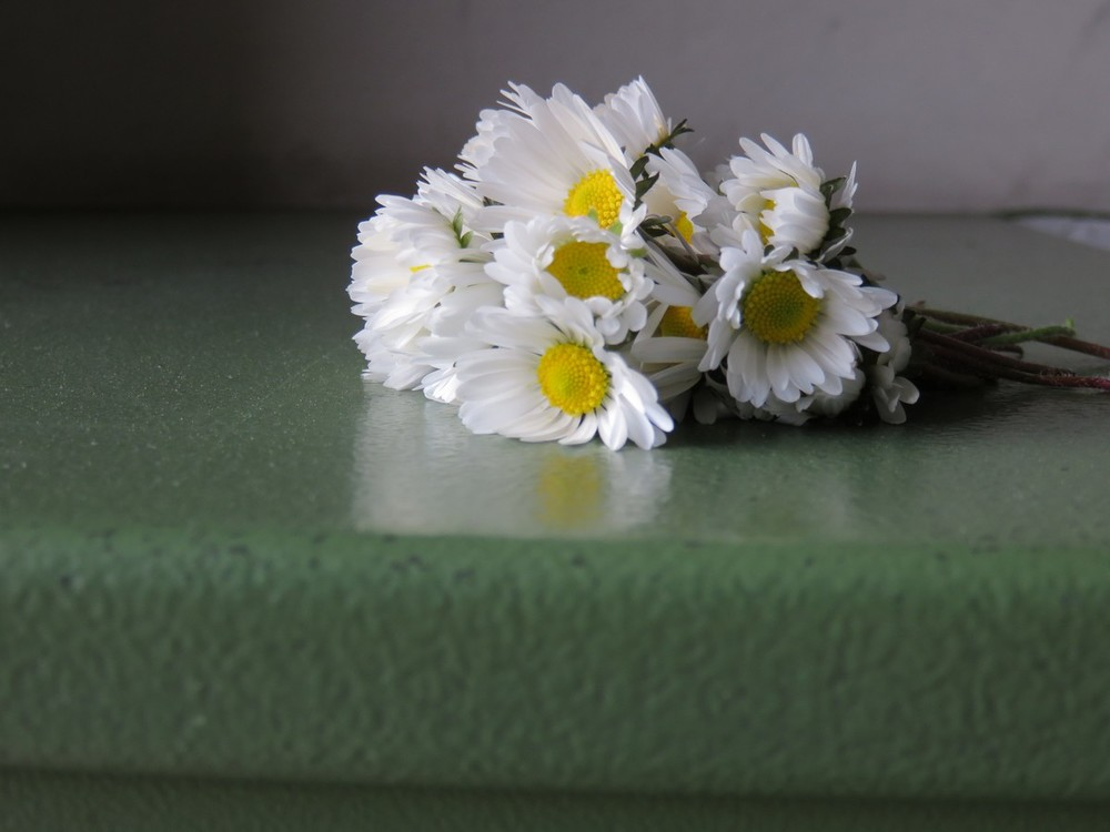 A found bouquet of wild daisies
