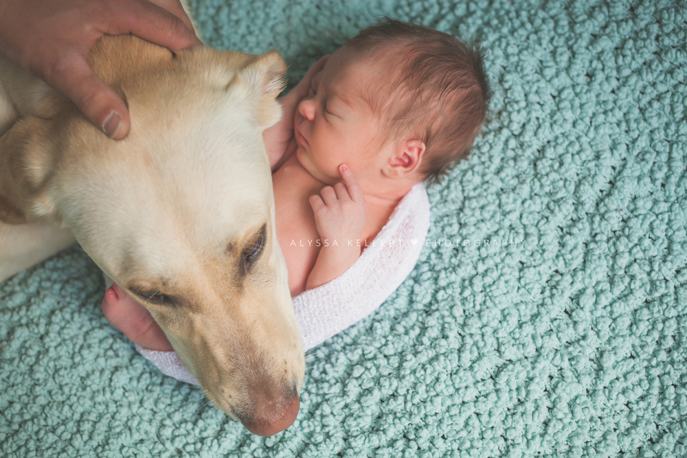 newborn-baby-photography-session-pet-dog-photo-vancouver-family-of-3