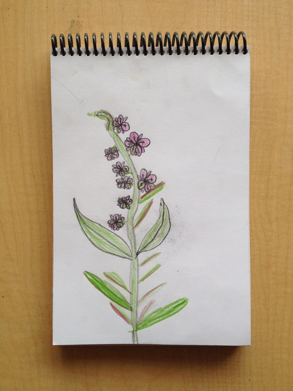 Art and Nature Camp 2014_2