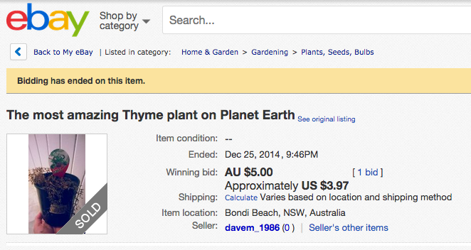 The Most Amazing Thyme plant on Plant Earth was accidentally sold at 9:46pm on Christmas day