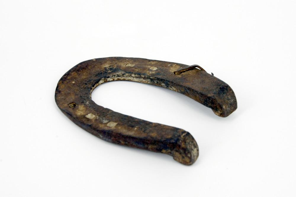 Ferro della mula Beccaccio.JPG