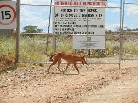 Gate Dingo.jpg