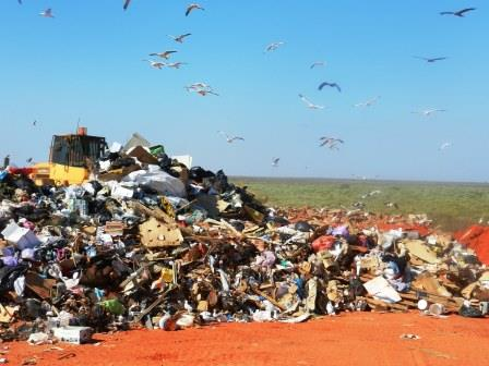 landfill birds.jpg