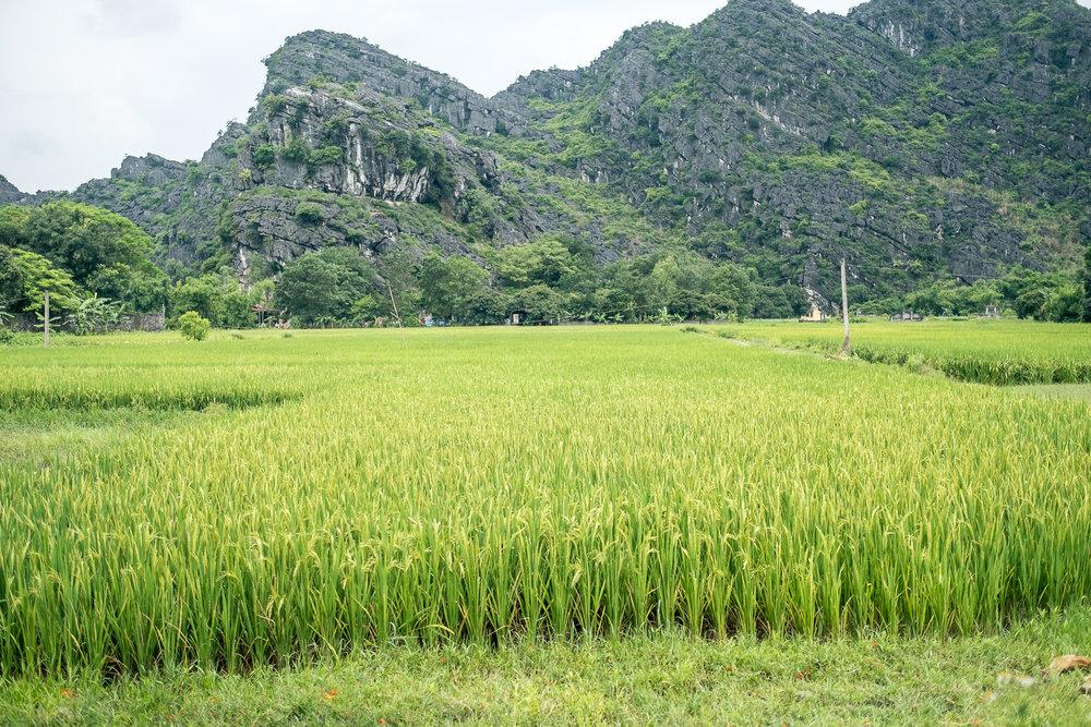Vietnam_Honeymoon_TheOutsiderBlog_DSCF8657.JPG