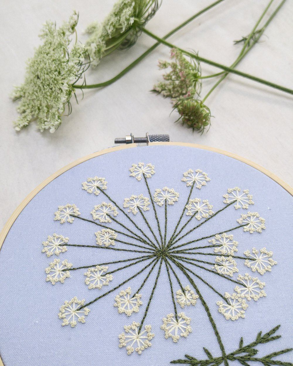 may :: queen anne's lace