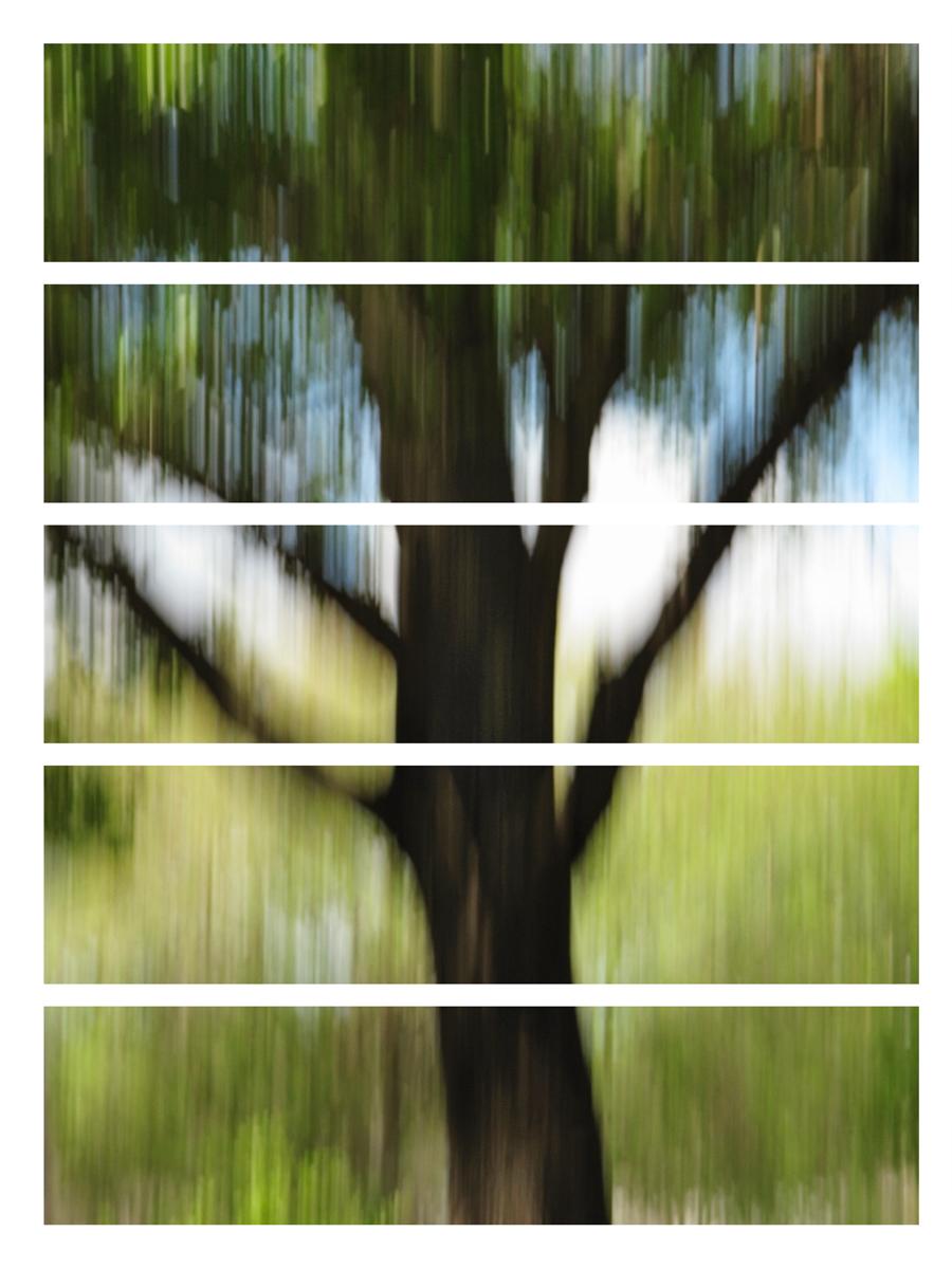 tree_1665.jpg