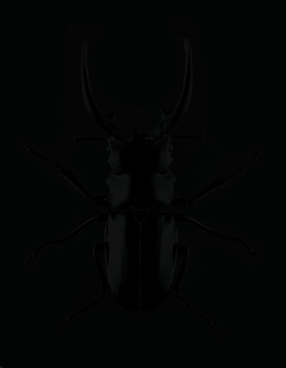_deer-horns.jpg