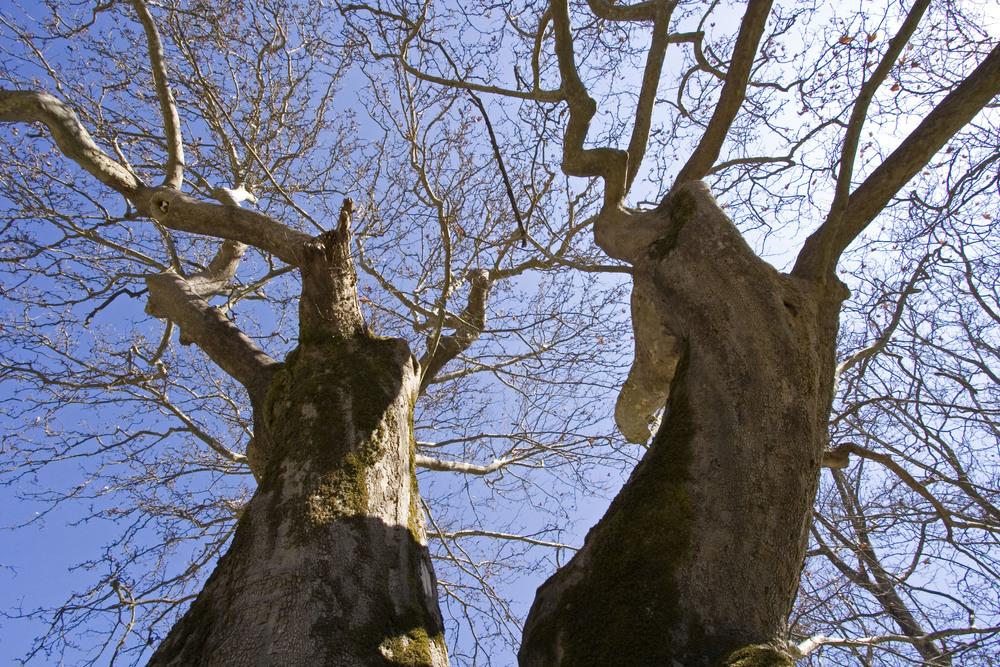 17.Trees.jpg