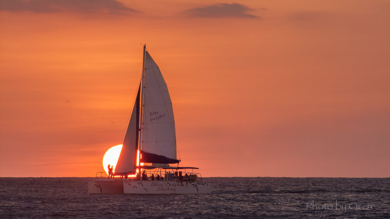 Blue Dolphin Sailing Sunset.jpg