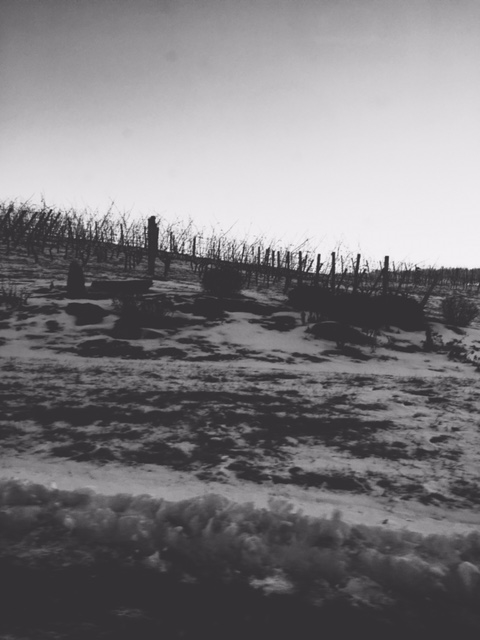 this is a photo of a vineyard in winter. that is not the subject of this post.