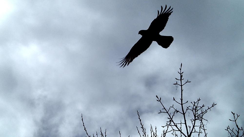 Ocell volant a San Martín de los Andes