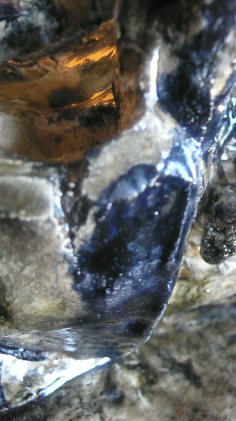 Mandible (detail)