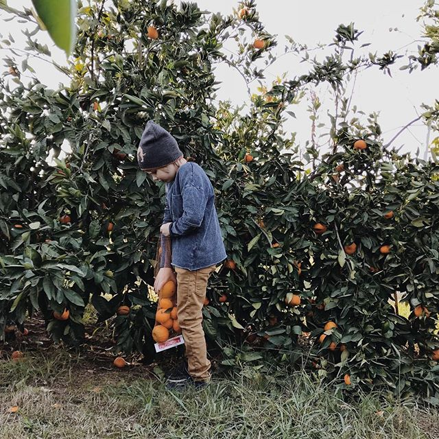 They each got to pick 3 pounds of mandarins, which they devoured by the time we came home 🤷🏻‍♀️