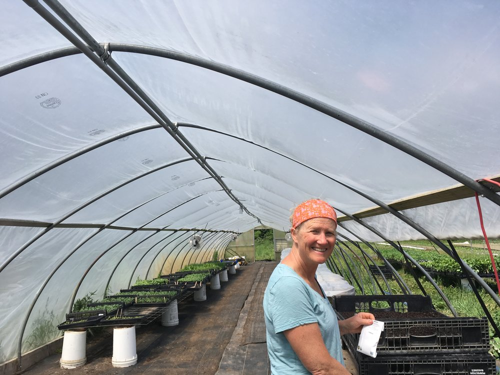 Jane! - My mother, greenhouse manager, photographer, and chief encourager.  She's such an important part of the farm!  Not only does she care for the baby plants in the greenhouse, she keeps following the schedule and seeding them when the rest of us can't imagine transplanting another plug.  She takes most of the photos in the newsletter, and makes sure to always take one of her CSA share.  She cares about the farm and it's farmers, bringing us treats, flower bouquets, and lots of encouragement.  Thanks Mom!