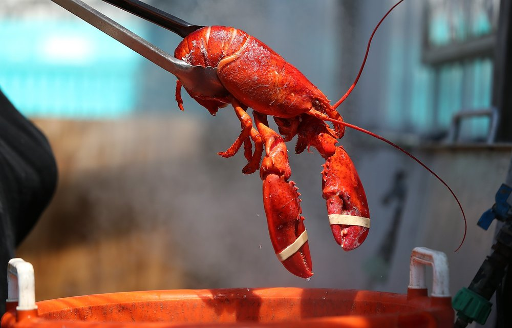 getty images lobster.jpg