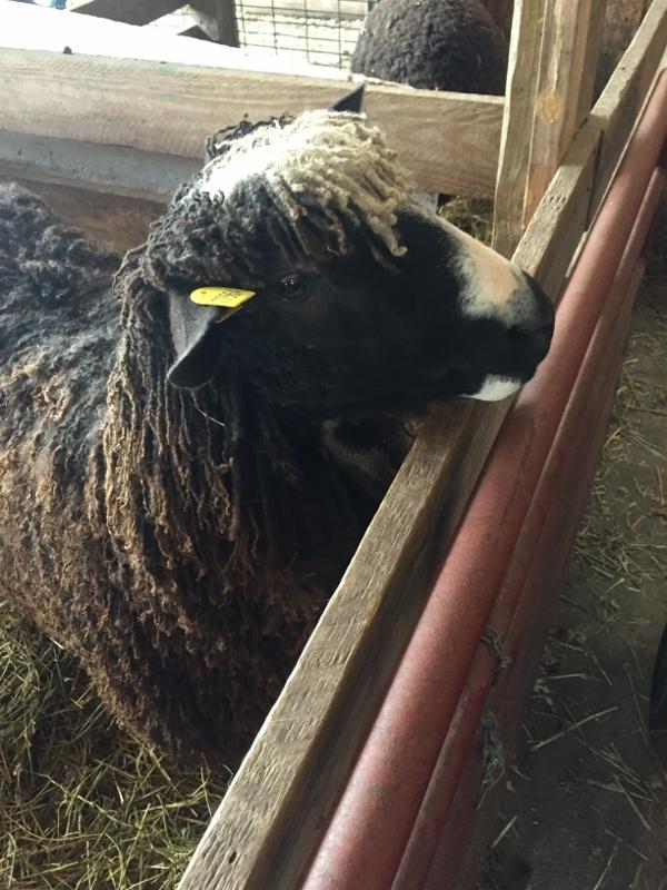 c413ab3c5 Recap  Maryland Sheep and Wool — MediaPeruana Designs