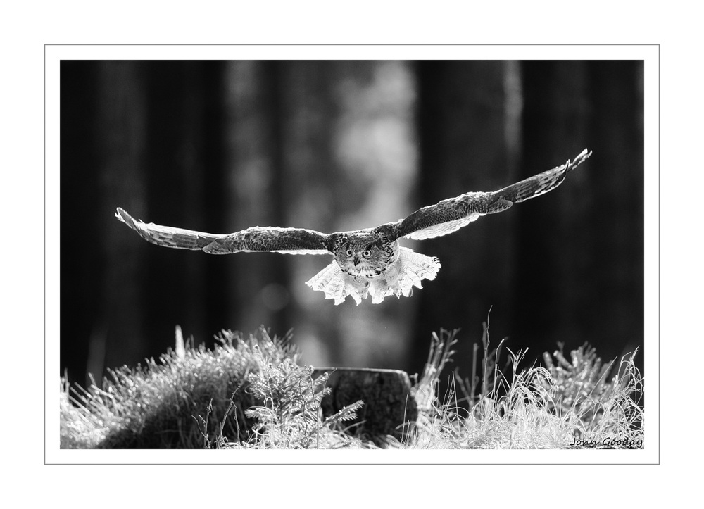 (Image: Eurasian Eagle-owl in flight, Czech Republic.    Canon EOS 1DX, EF500mm f/4L IS II, 1/1600 sec @ f/4, ISO 800  )