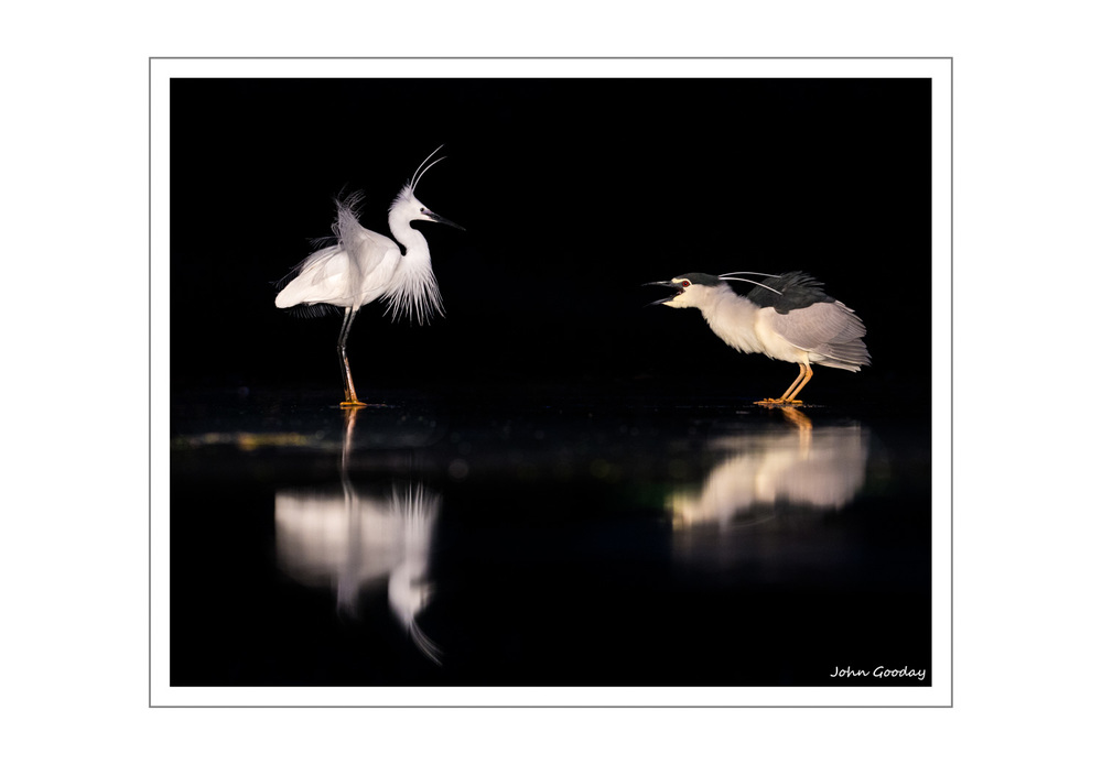 (Image: A Little Egret and a Night Heron having a dispute about who's pool it is. Canon EOS 1DX, EF70-200mm f/2.8L IS II, 1/160 sec @ f/5, ISO 2000, tripod, hide)