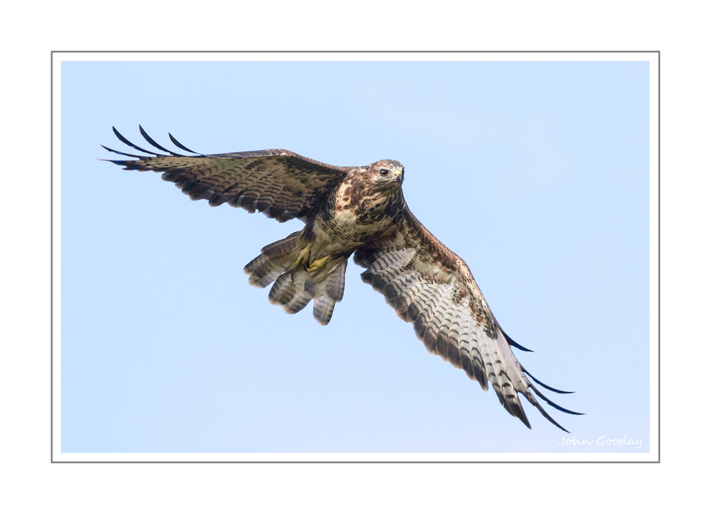 Image: Buzzards are one of my nemesis birds. They're usually pretty wary of people so it can be pretty frustrating trying to get a decent picture. This one had obviously not read the Buzzard vs Photographer Training Manual as it flew towards me for once, before disappearing into the distance. Taken in the Brecon Beacons National Park, Wales. Canon EOS 1DX, EF500mm f/3L IS II + 1.4x, 1/2000 sec @ f/8, ISO 1600