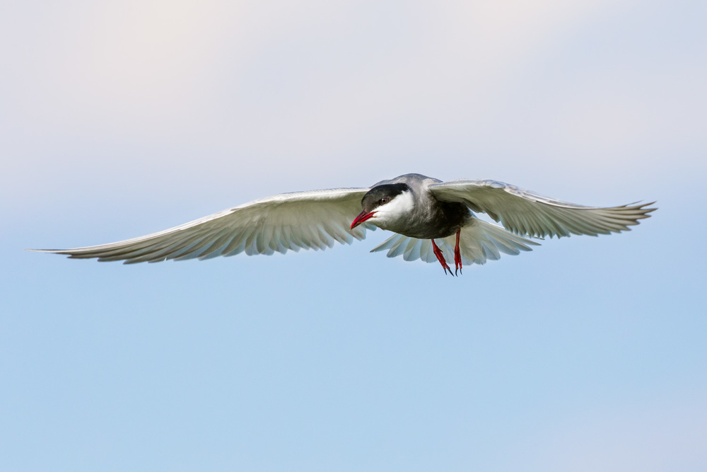 tern improved _-9280  Website.jpg