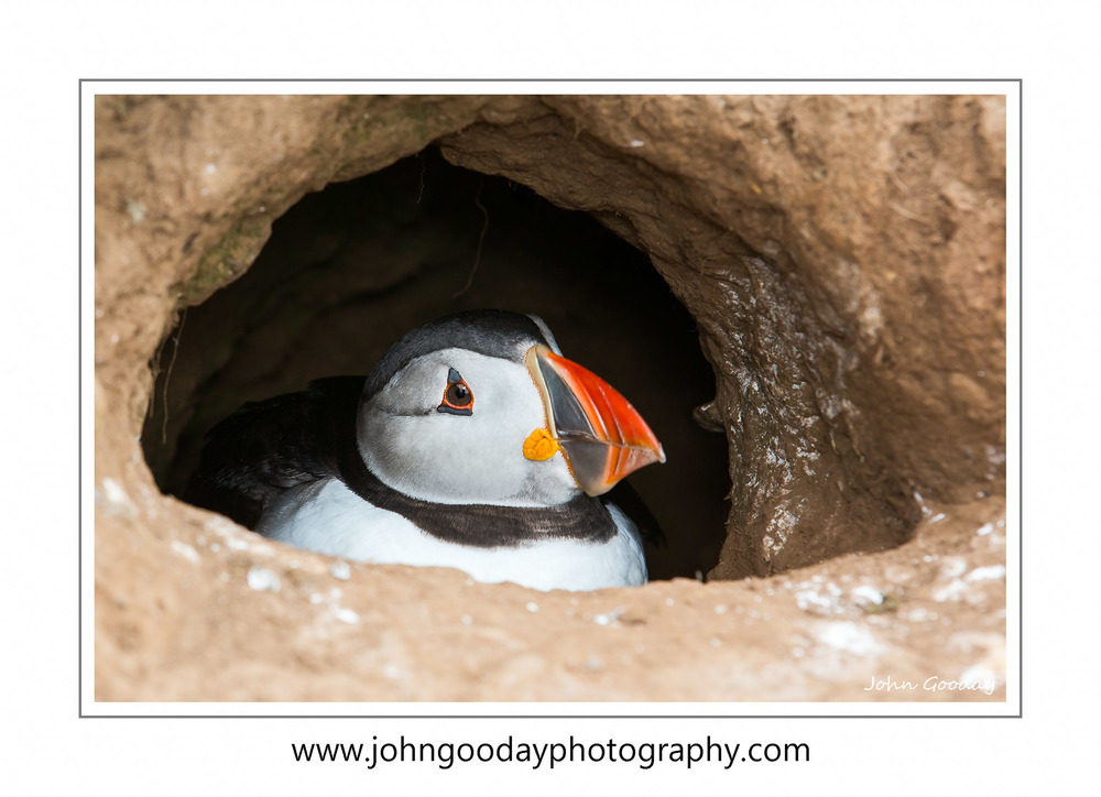 Puffin in its burrow Canon 5D Mark III, EF70-200mm f/2.8L IS, 1/200 sec, f/7.1, ISO 250, EX600-RT Speedlight with 30cm softbox