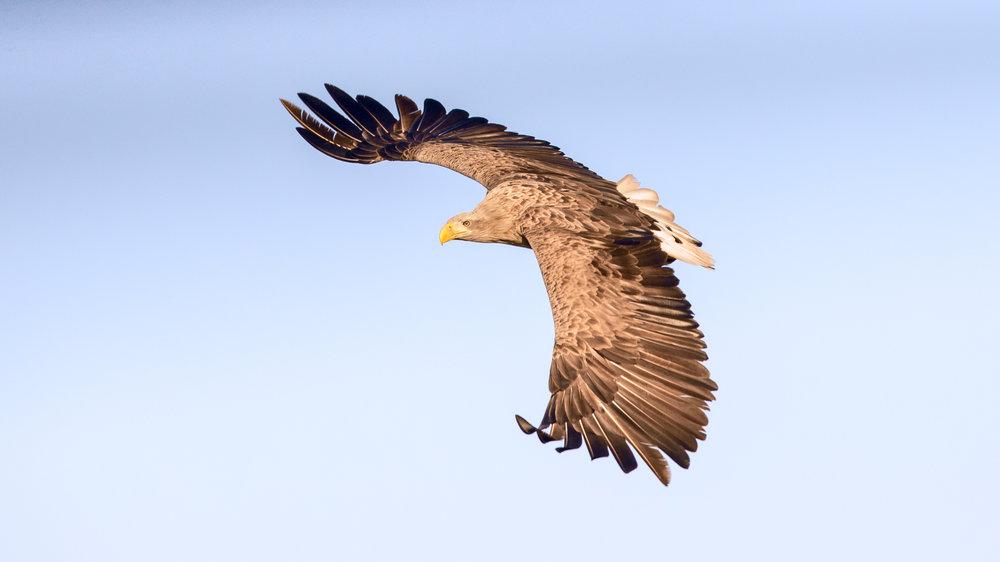 eagle 16-9 ratio lab color _70R0911.jpg