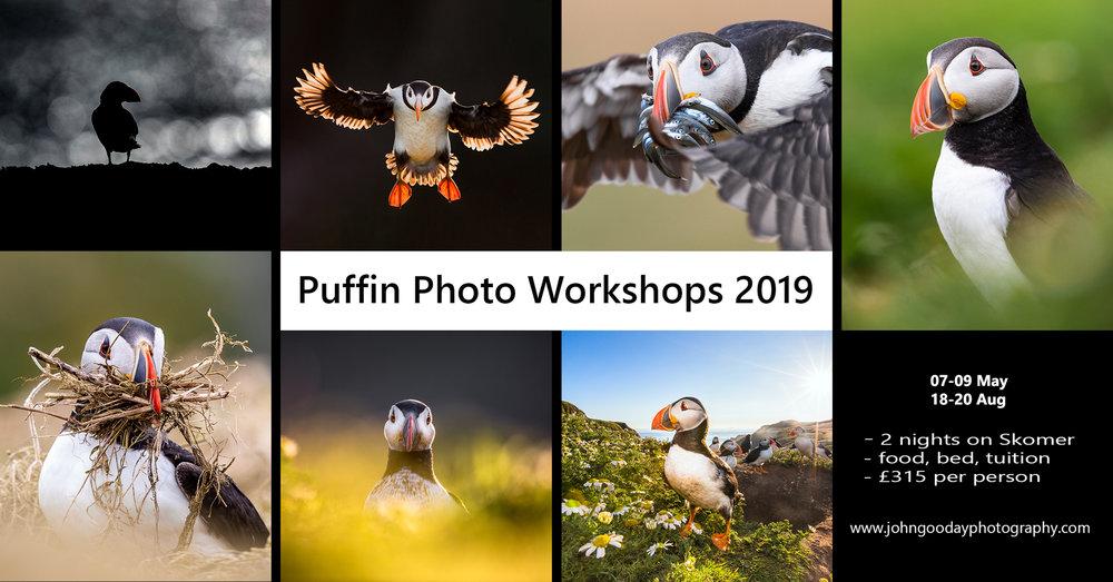 Puffin workshop poster 2019.jpg