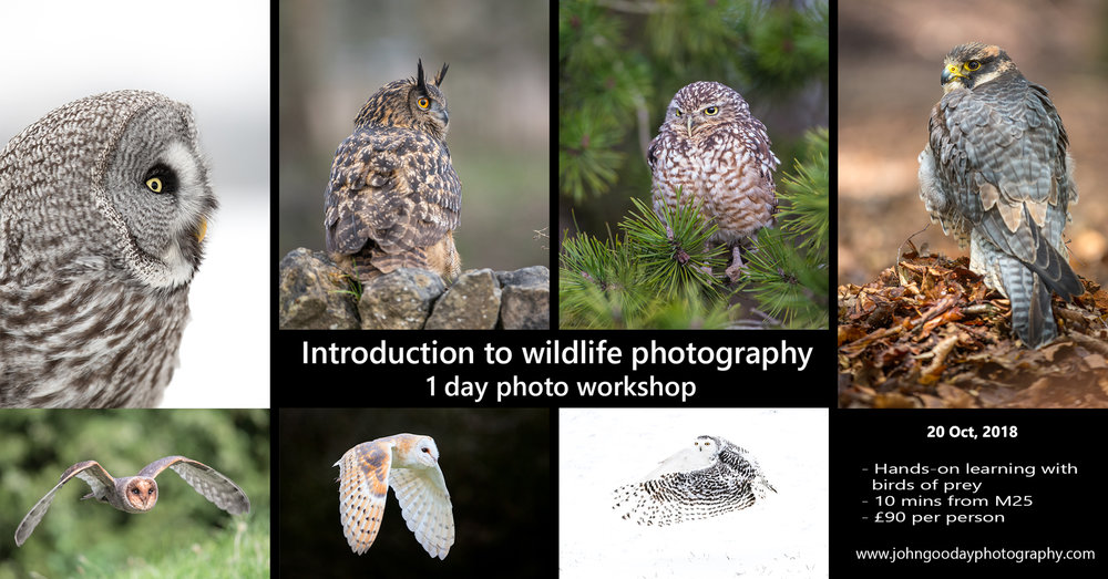 Intro to wildlife photography poster.jpg