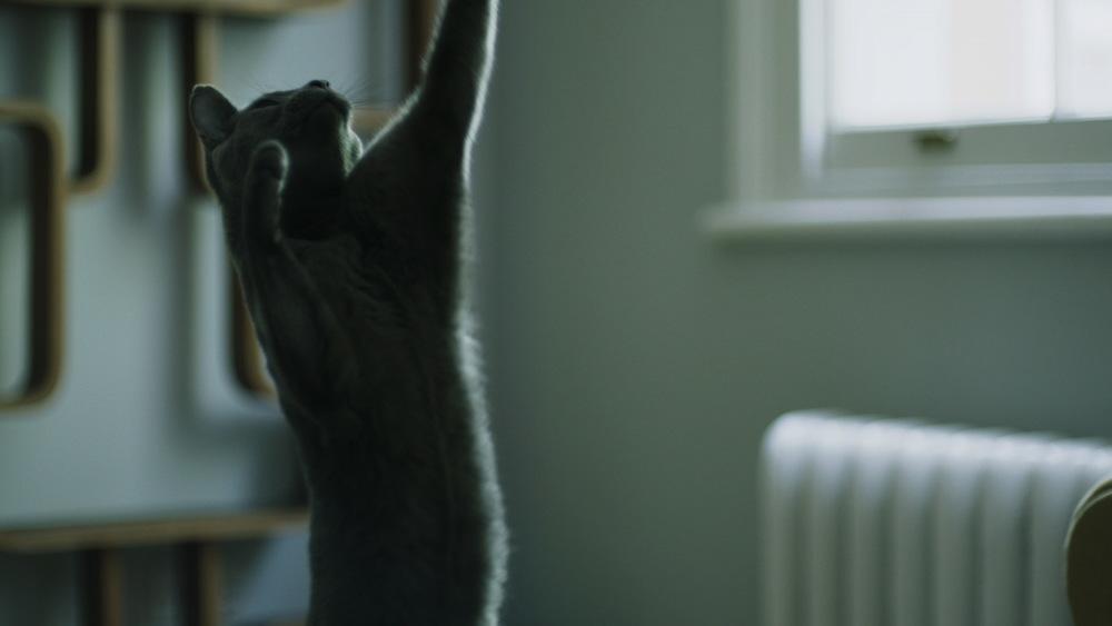 dynamic cat.jpg