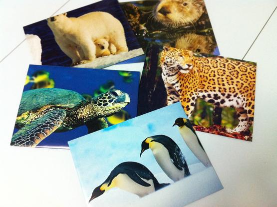 calendarenvelopes.jpg