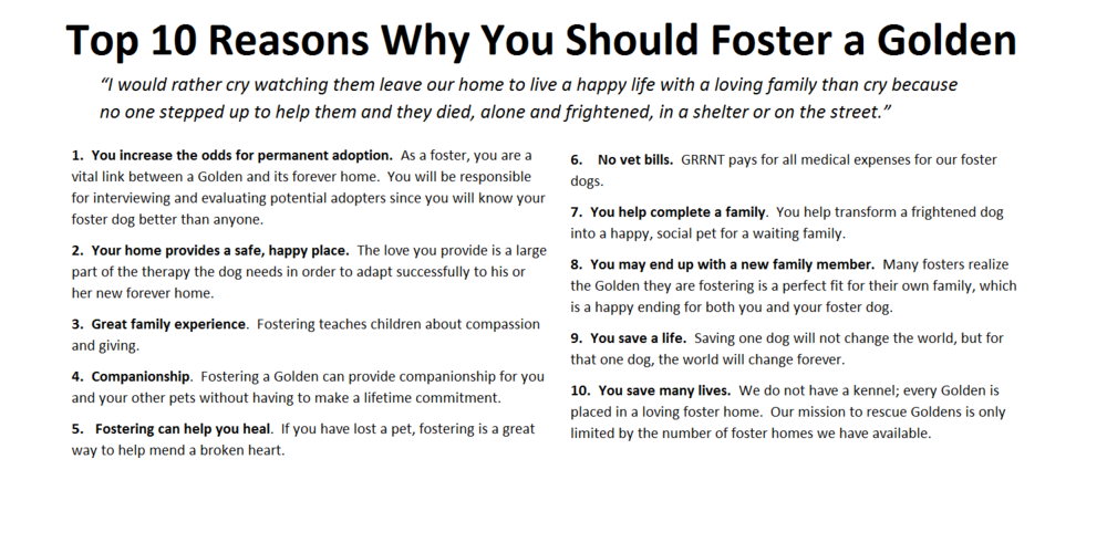 Top 10 Reasons Why You Should Foster a Golden