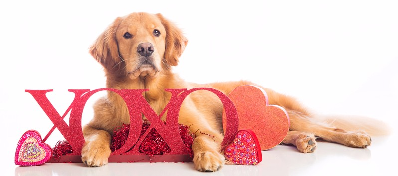 Valentine Raffle — Golden Retriever Rescue of North Texas