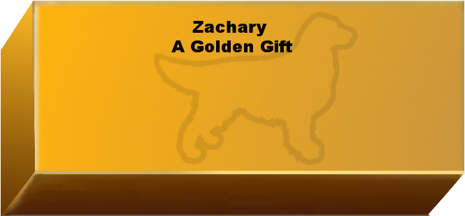 Golden Wall Brick empty 6.png