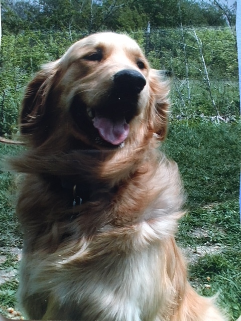 In loving and grateful memory for our life with Buster, 2001-2017, adopted from the DFW Golden Retriver Rescue. Donna H.