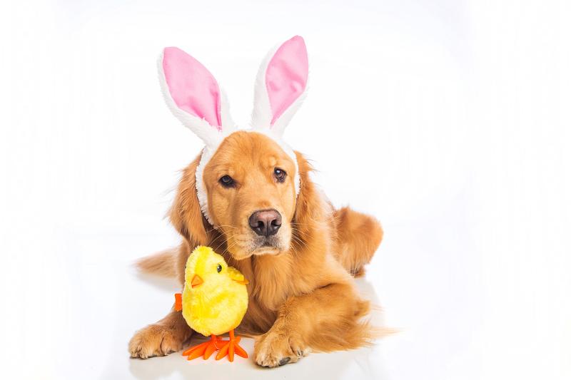 North Texas Dog Adoption Events