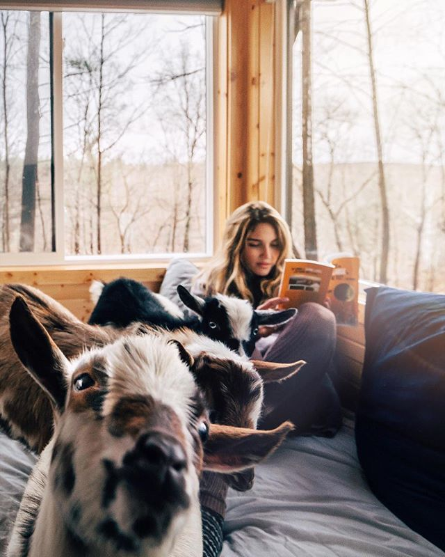Either you want to have a glimpse into tiny house living or you just need a place to unplug from the world for a couple days surrounded by waterfalls and baby goats make sure to check out @thinkbig_atinyhouseresort