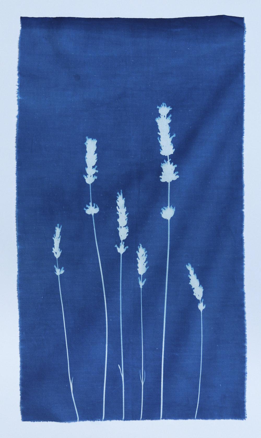 Provençal Lavender on fine cotton