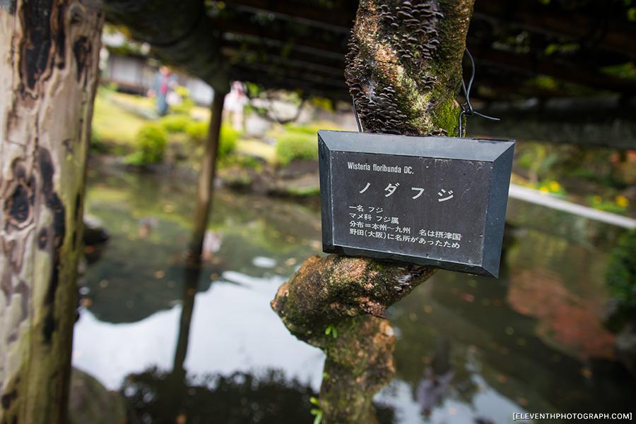 InJapan2014_308.jpg