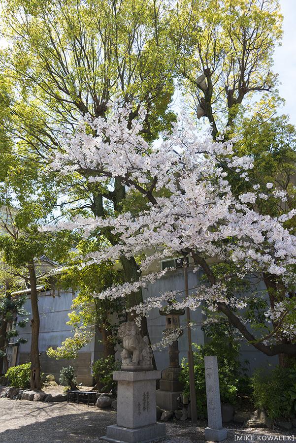 Japan_Osak&Tokyo_MK_017.jpg