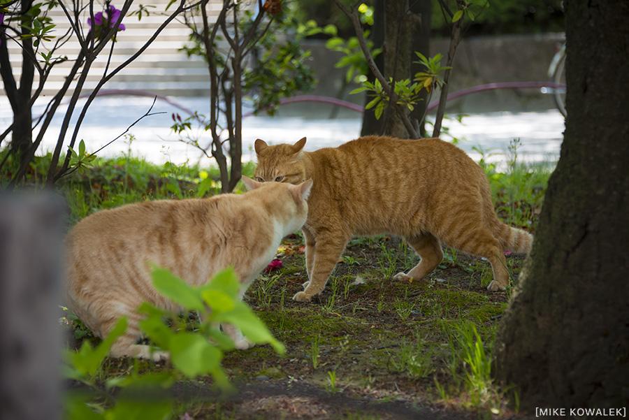 Japan_Tokyo_May2015_152.jpg
