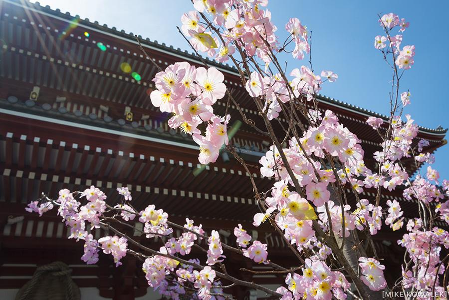 Japan_Tokyo_May2015_164.jpg