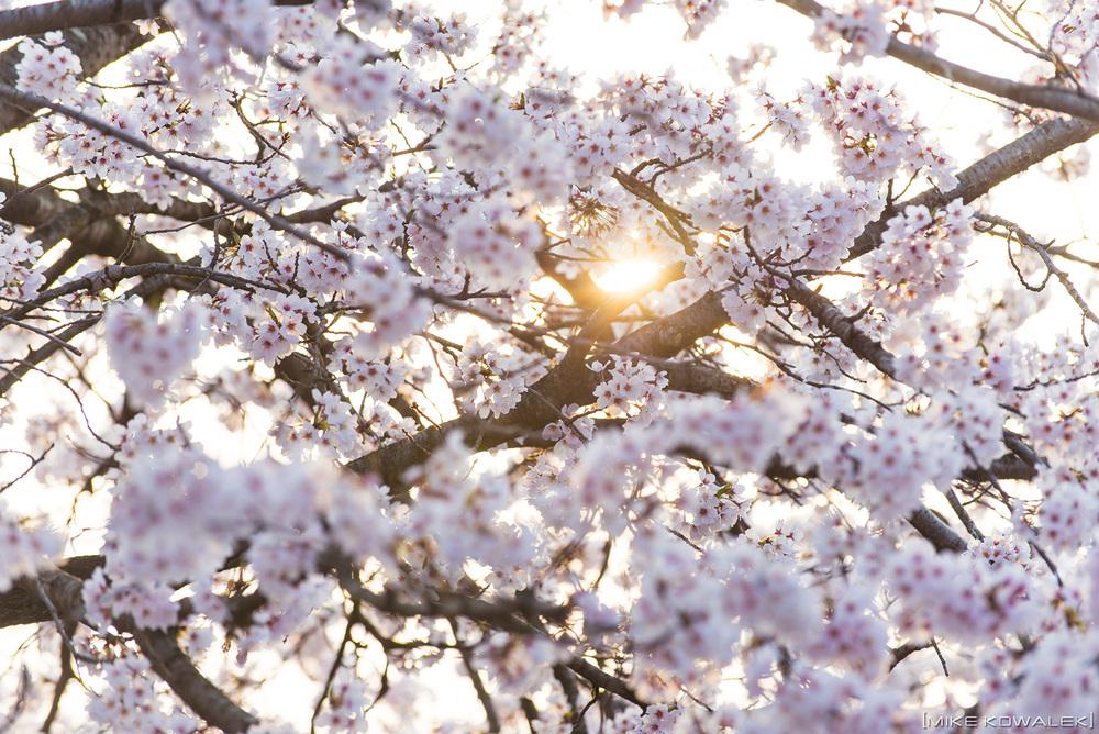 Sakura_Ujiie_2016_02.jpg
