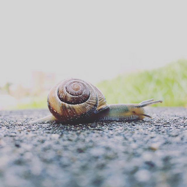 16/52 — Behold . . . #abmtravelbug #abmlifeisbeautiful #exploreeverything #finditliveit #folktravel #lifeofadventure #livethelittlethings #letsgosomewhere #livefolk #mytinyatlas #mybeautifulmess #nothingisordinary #pnw #pnwisbest #pnwisbeautiful #pnwonderland #seattle #thehappynow #thatsdarling #upperleftusa #thevisualcollective #visualsoflife #wanderfolk #welltraveled #wandeleurspark #wanderwashington #linuxfest #linuxfestnorthwest #snail
