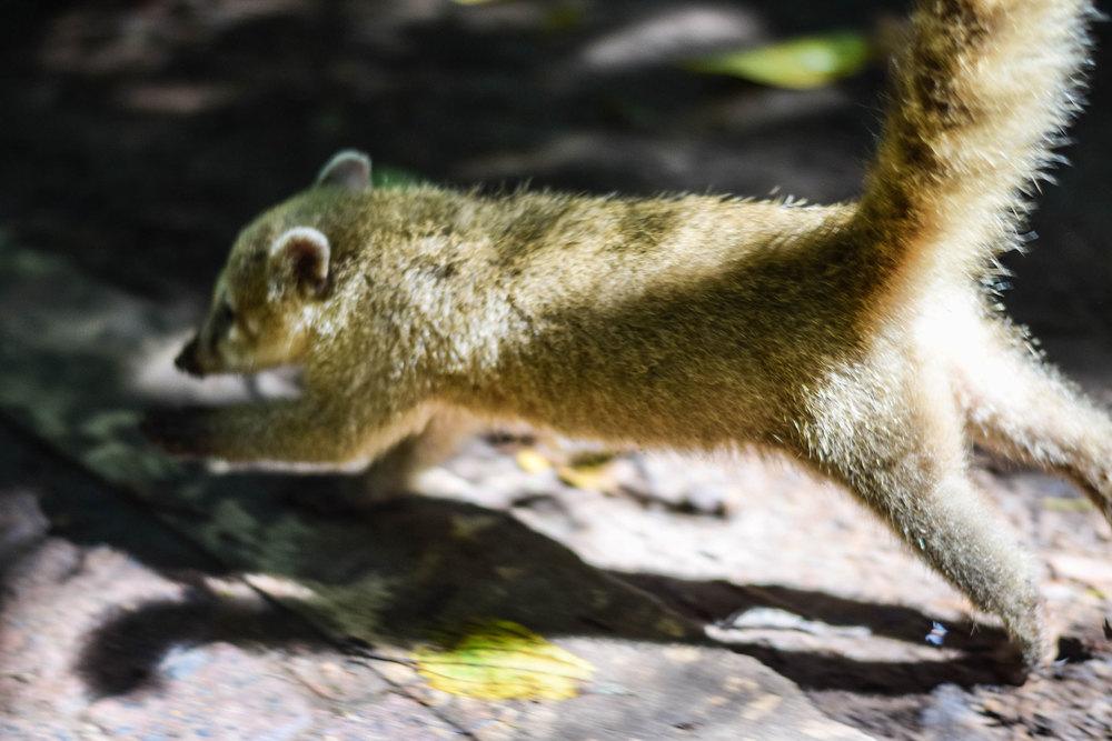 Meet the locals at Iguazu