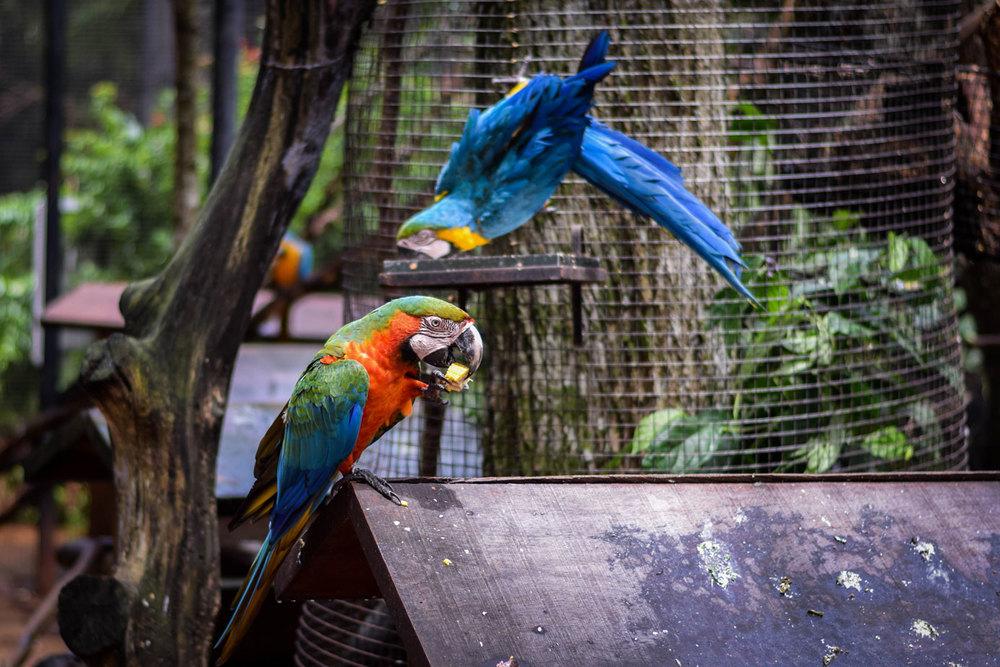 Bird-Park-21.jpg